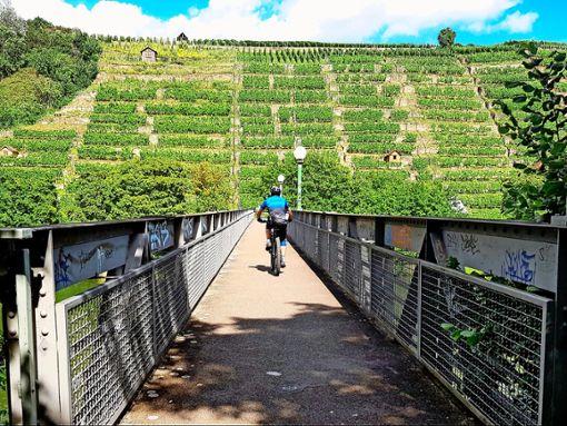 Dieses Panorama wollen sich weder Radfahrer noch Spaziergänger oder Jogger entgehen lassen.  Foto: Tatjana Eberhardt