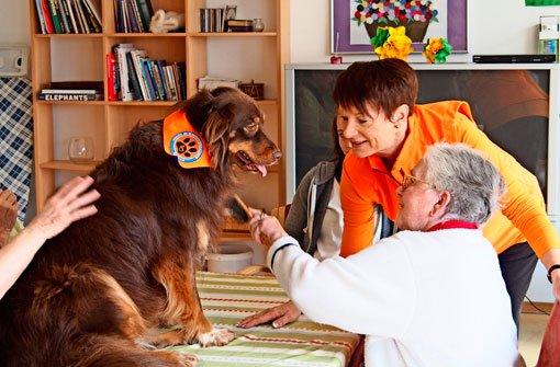 Therapiehund bei der Arbeit mit Demenzkranken. Foto: Sass-Baitis